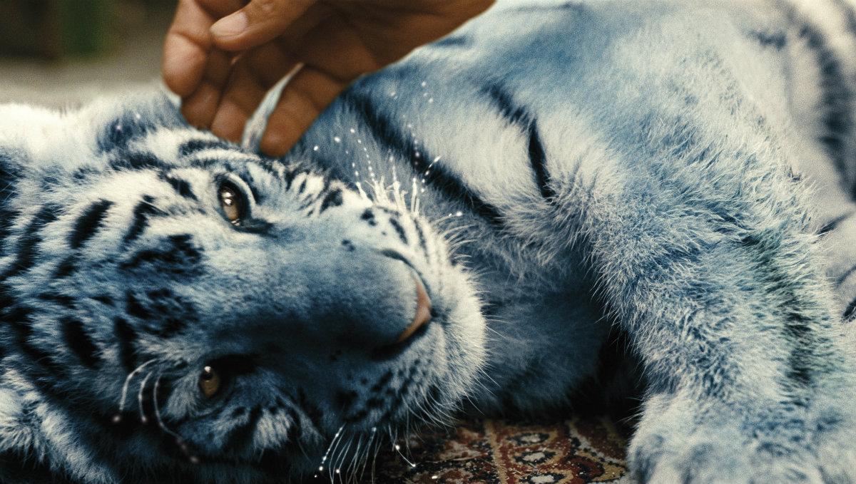 Der_blaue_Tiger