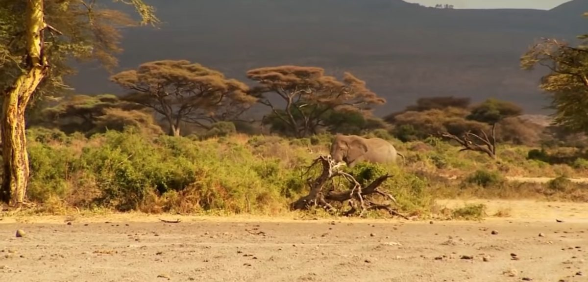 Kurzfilm zum Wochenende: Thomas und Korduni – Bienen retten Elefanten (2019)